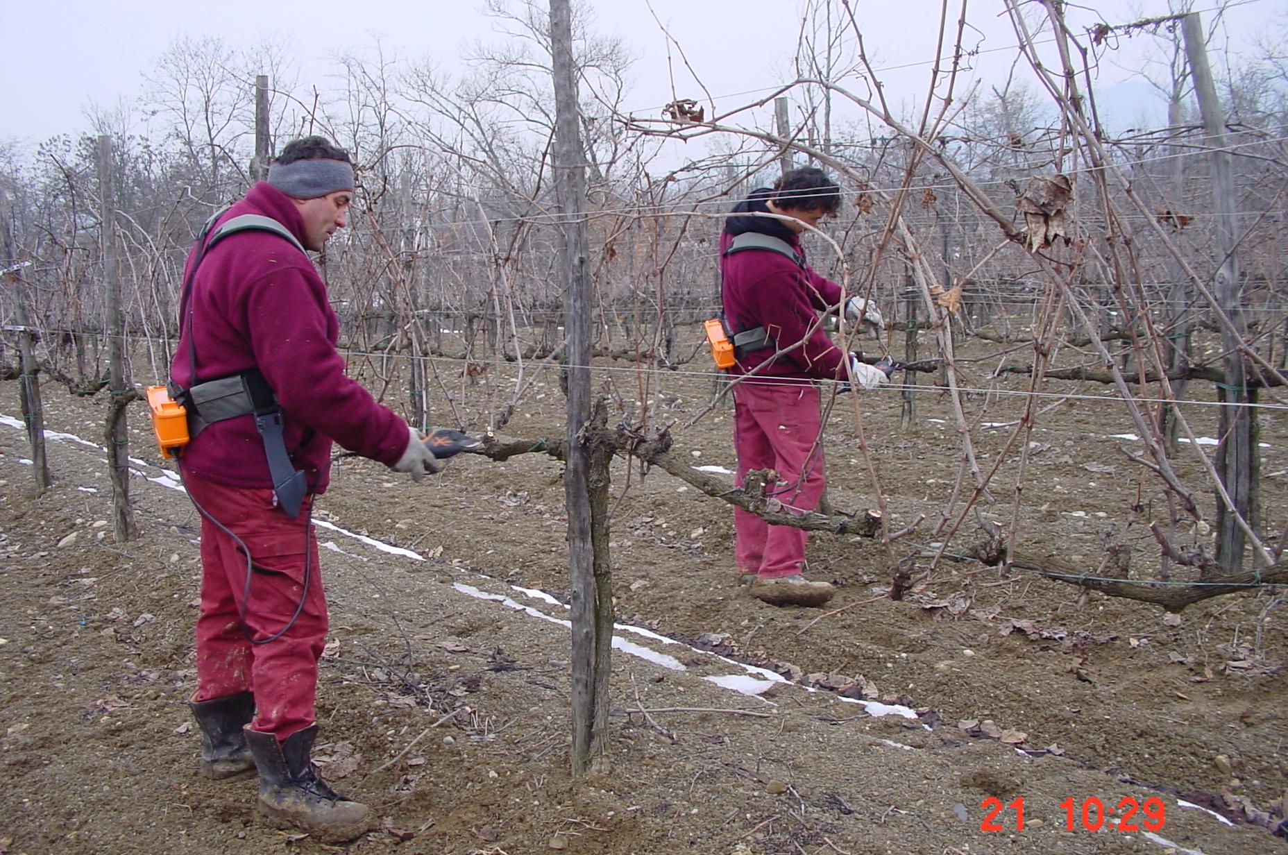 wina-wloskie-organiczne-cabanon (6)