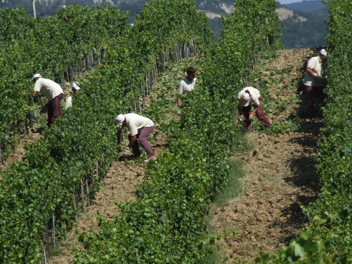 wina-wloskie-organiczne-cabanon (7)